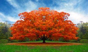 I-Comuni-dovranno-piantare-un-albero-per-ogni-neonato-in-vigore-la-legge-dal-16-febbraio