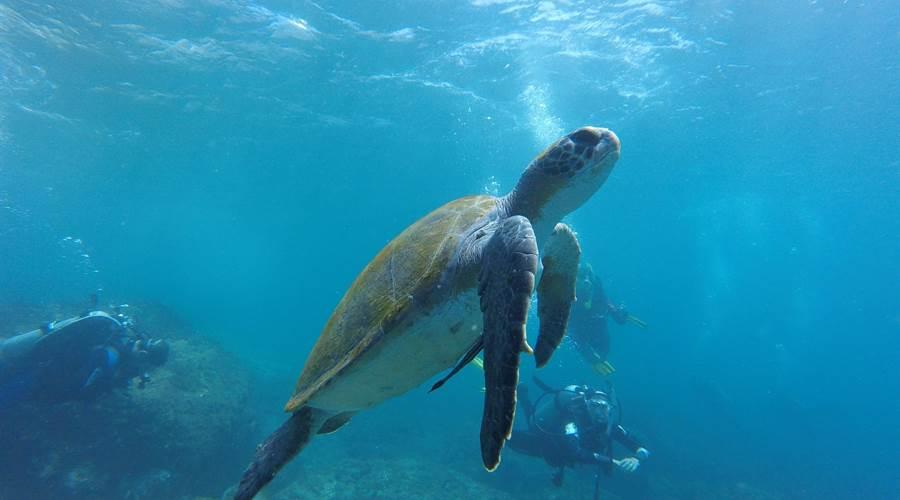 2019121684841152_sea-turtle-1296565-1920_L900X500