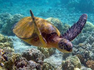 tartaruga-di-mare