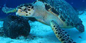 turtle-1702680_640-640x321